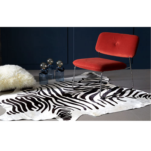 Kohus-Zebra-ny-bild
