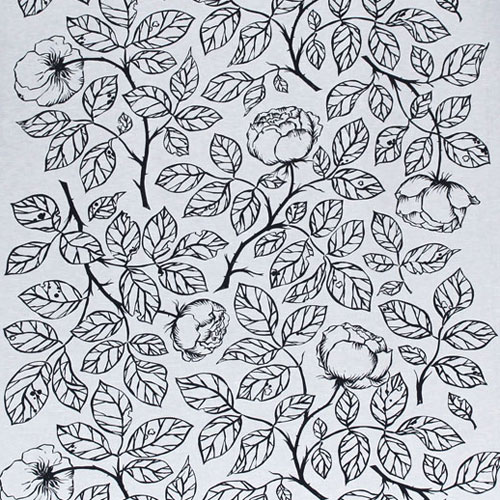 Rosa-Centifolia-Svart-2