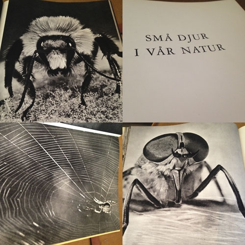 bild-insekter-4