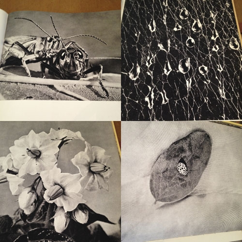 bild-insekter-5