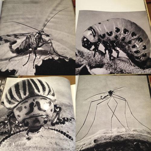 bild-insekter-6