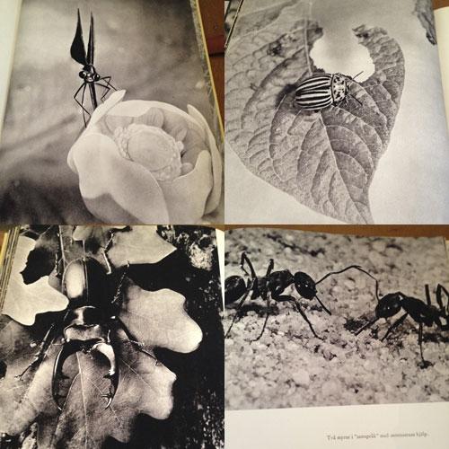 bild-insekter-7
